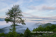 66745-04913 Early morning fog along Foothills Parkway Great Smoky Mountains National Park TN