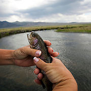 A woman with a fish she caught in the Sierras before it is released back into the water.