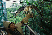 An endangered Philippine eagle perches on the gloved hand of a captive breeding specialist at the Philippine Eagle Center.