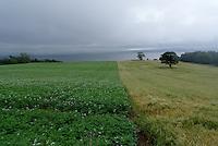 Fields in Northern Ireland