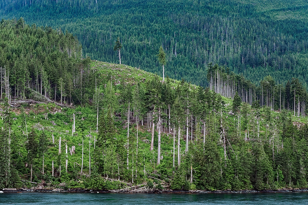 Clearcutting and replanting along the Campell River, British Columbia, Canada