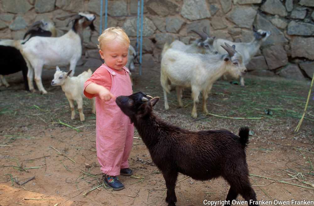 Tunui Franken playing with a goat - photograph by Owen Franken