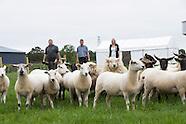 Sheep 2015 TEAGASC