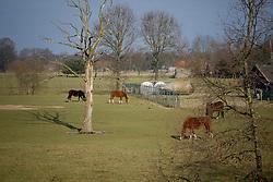 Gerald Lenaerts <br /> Stud Farm Overis - Peer 2009<br /> Photo © Dirk Caremans