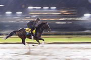 November 1-3, 2018: Breeders' Cup Horse Racing World Championships. Yoshida (JPN)
