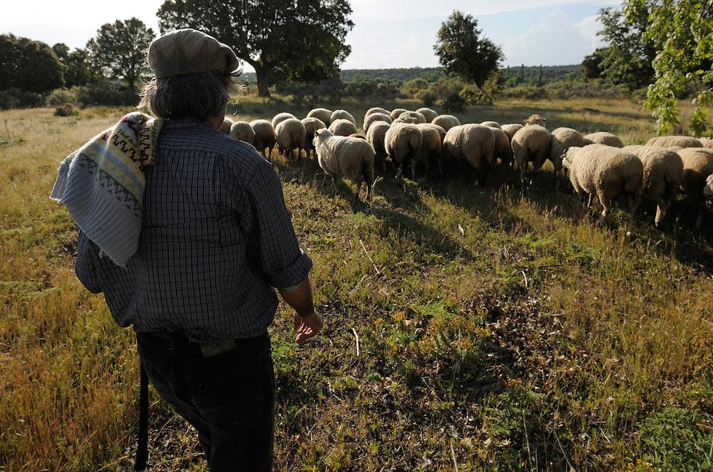 Shepherd, Campanario de Az&aacute;ba, <br /> Salamanca region, Castilla y Le&oacute;n, Spain