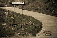 Corleto Perticara (PZ) 17.02.2009, Italy - Tempa Rossa - Speranze e realtà del giacimento Total in Basilicata. Il  giacimento petrolifero si estende in superficie per circa 30.000 ettari di terreno boschivo a nord-est dell'abitato, ampiamente sfruttato già dal 2001 nella produzione di energia eolica. Il 28 gennaio 2008 il comune di Corleto Perticara, nella persona del suo sindaco, avvocato Paolo Pietro Montano e Total Italia S.p.A. nella persona del suo amministratore delegato per il settore Esplorazione e Produzione, Dott. Lionel Levha, hanno siglato un Patto storico per la concessione dei diritti di superficie necessari alla realizzazione di un centro olio in località Tempa Rossa, a quattro Km in linea d'aria dal centro abitato, per un tempo pari a 99 anni. La coltivazione di idrocarburi, che a a pieno regime comporterà l'estrazione di 50.000 barili di greggio al giorno, gas naturale per 250.000 m2, GPL per 267 tonnellate e zolfo per 60 tonnellate, avrà inizio entro l'anno 2011. Le riserve sono stimate intorno ai 420 milioni di barili equivalenti. NELLA FOTO: Segnale indicante il Pozzo Perticara 1.