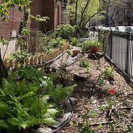 Garden at PS 6 on 81 st and Madison