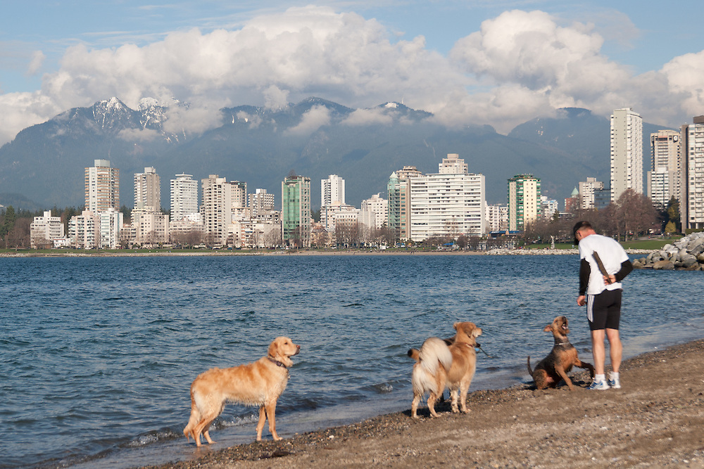 A man takes his dog for a walk infront of a sunny view looking over the Burrard Inlet in Kitsilano, Vancouver. A popular area for dog walkers and joggers eager for excercise. The city of vancouver is in the background followed by a backdrop of mountains.