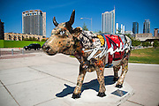 Thriller Cow, a piece in CowParade by Greg Miller, Austin, Texas, August 6, 2011.  CowParade is considered to be the largest and most recognized public art event in the world. Starting July 2011, about 100 cows painted by local artists went on display throughout Austin. This cow is decorated with images of the red leather jacket that Michael Jackson wore for the Thriller video.  Austin businessman and philanthropist, Milton Verret, bought the jacket at auction to raise funds for charities.