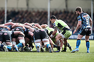 Kahn Fotuali'i of Northampton Saints (2nd right) puts the ball into the scrum during the LV Cup Final match at Sandy Park, Exeter<br /> Picture by Andy Kearns/Focus Images Ltd 0781 864 4264<br /> 16/03/2014