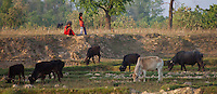 Nepali girls watching over their cattle, Bardiya, Nepal