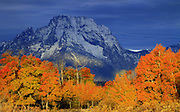 Stormy weather and Fall colors light up the iconic Massifs of Grand Teton National Park.