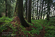 15: INSIDE PASSAGE OLD GROWTH FOREST