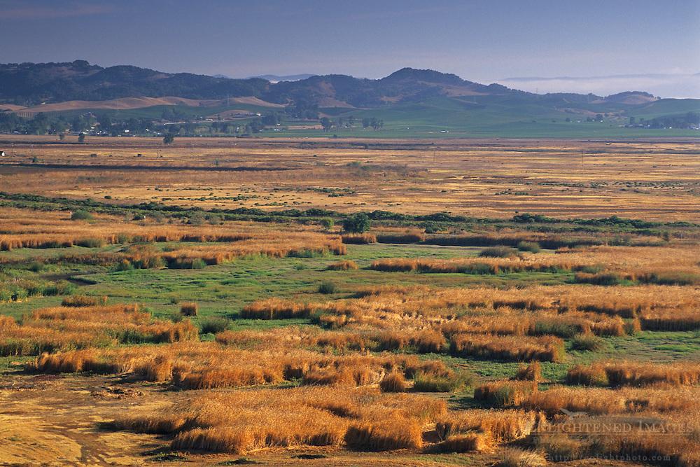 Viansa Wetlands at Viansa Winery, Sonoma Valley, Sonoma County, California