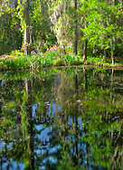 Magnolia Gardens,Charleston South Carolina, Springtime Landscape and Water