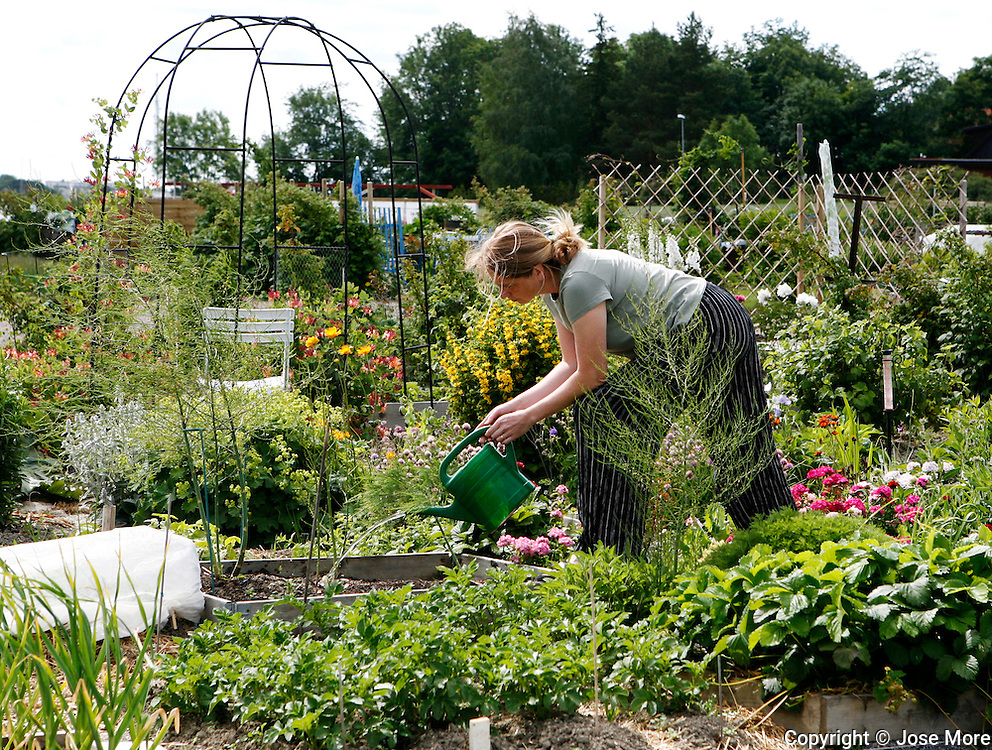 Communal gardening Uppsala is the fourth largest city of Sweden, and home to Uppsala University the oldest centre of higher education in Scandinavia.<br /> Photography by Jose More