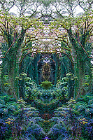 Lost in the majestic rainforest of the Akaka forest, you may encounter the rejuvenating beauty of sun-splattered hapu'u ferns under canopies of albezia.  It's time to let go of your mind and receive nature's alignment.  Let her draw you in and release the mind. Few scenes bring such an intense sense of peace, as though mother Gaia were embracing your aura with her infinite arms.<br /> <br /> Good for the Fourth Chakra: Love and Compassion<br /> Awakening to spiritual awareness; forgiveness and service.<br /> Location: Middle of the chest on the breast bone at the level of the nipples.<br /> Organ/Gland: Heart, lungs, thymus gland<br /> Deficiency/Excess: Disorders of the heart or lungs, asthma, allergies, immune deficiency problems, and tension between shoulder blades.<br /> Color, Element: Green, Air.