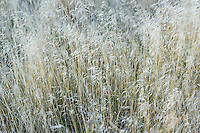 Closeup of dry grasses on the grasslands of Southeastern Washington State USA.