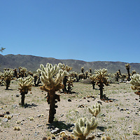 Remote desert location in America with cactus plants under a blue sky