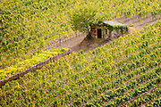 Old stone barn in vineyard near Montalcino in Val D'Orcia, Tuscany, Italy RESERVED USE - NOT FOR DOWNLOAD - FOR USE CONTACT TIM GRAHAM