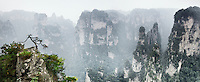 Tree on a cliff of a mountain peaks in fog. Panorama at Zhangjiajie National Forest Park, Zhangjiajie, Hunan, China