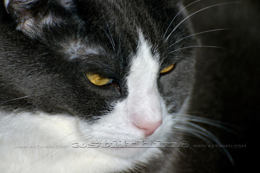 Brave cat Tabasca.