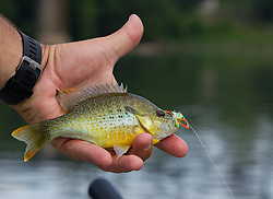 Sunfish on the Holsten