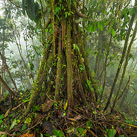 Andes Cloud Forest, Mondo area, Ecuador