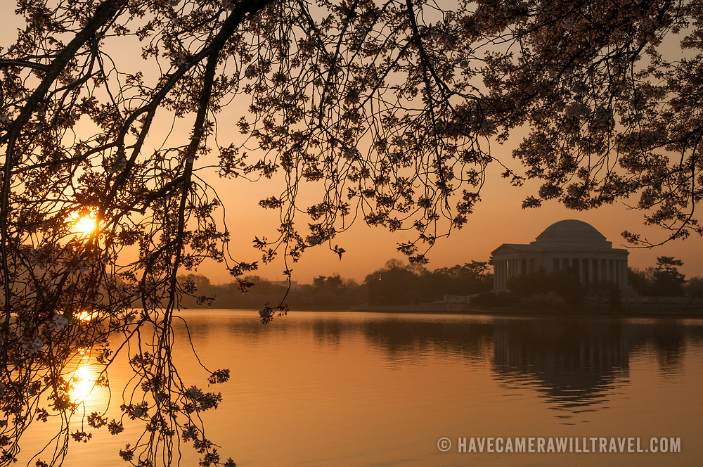 Sunrise at the Tidal Basin, with the Jefferson Memorial at right and cherry blossoms in bloom at top and left of frame. The Yoshino Cherry Blossom trees lining the Tidal Basin in Washington DC bloom each early spring. Some of the original trees from the original planting 100 years ago (in 2012) are still alive and flowering. Because of heatwave conditions extending across much of the North American continent and an unusually warm winter in the Washington DC region, the 2012 peak bloom came earlier than usual.