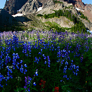 Spring flowers at the foot of Three-Fingered Jack in Bend, Oregon