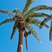 Palm, Eluanbi Park, Kenting, Pingtung County, Taiwan