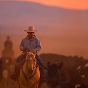 2011 cowboy calendar, march, morning gather, bob howard, cow lakes ranch, jordan valley, oregon