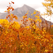 Mt. Crested Butte dressed in autumn, Crested Butte, CO.