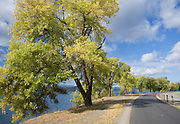 Idaho,Coeur d'Alene. Lakeshore trees and the Centennial Trail along Coeur d'Alene Lake Drive as summer turns to autumn. . PLEASE CONTACT US FOR DIGITAL DOWNLOAD AND PRICING.