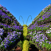 Butterfly Topiary in Future World at Epcot in Orlando, Florida<br /> Most of Epcot's topiaries during the Flower Garden Festival are shapes of iconic Disney cartoon characters.  About thirty others are created for their sheer beauty such as this butterfly in flight.  It was located in front of the Butterflies on the Go tent. In this exhibit you could watch about 1000 butterflies representing 10 species flutter around you. This Future World special attraction was sponsored by Go Go SqueeZ.