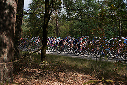 The peloton appear through the trees at Boels Ladies Tour 2018 - Stage 3, a 129km road race in Gennep, Netherlands on August 30, 2018. Photo by Sean Robinson/velofocus.com