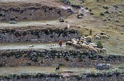 Herding Sheep, Peru --- Image by © Jeremy Horner/CORBIS