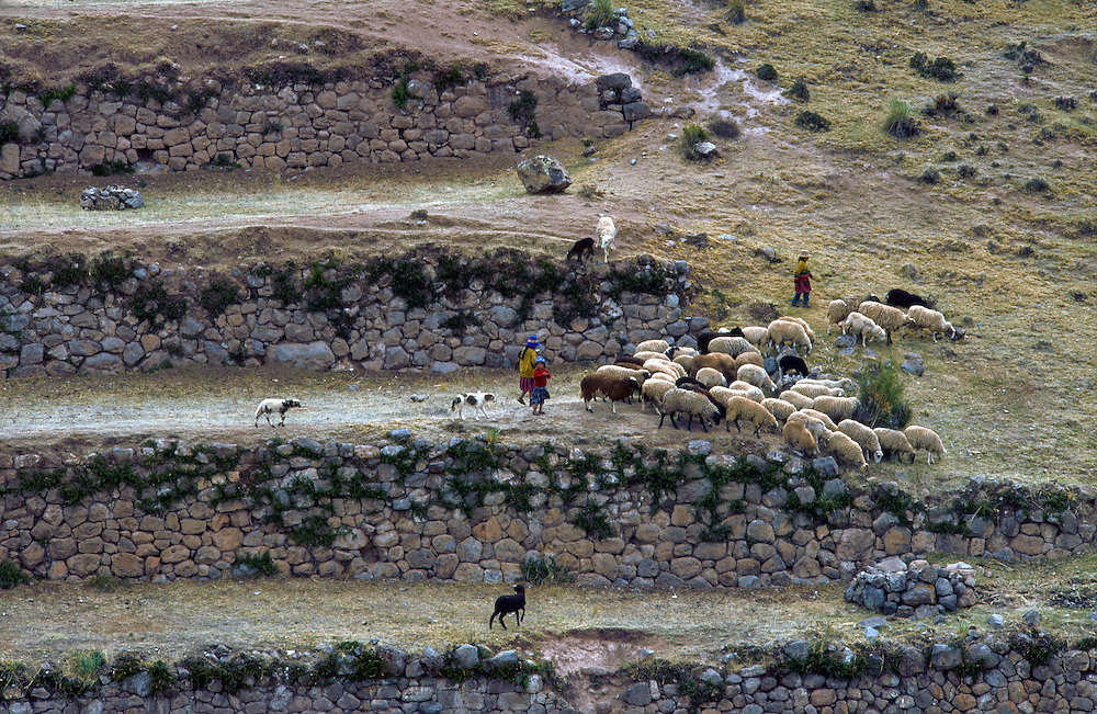 Herding Sheep, Peru --- Image by © Jeremy Horner/CORBIS