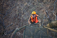 DEER HUNTER IN BLAZE ORANGE CLIMBING A LADDER STAND