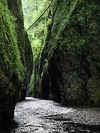 This slot canyon is the entrance to the lower portion of Oneonta Gorge, on the Oregon side of the Columbia Gorge. This image was captured about an hour and a half after sunrise, when the sun was just beginning to illuminate the forest high above the canyon walls.