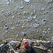 January 30, 2014 - New York, NY : The little red lighthouse, which is located beneath the George Washington Bridge in Manhattan, is seen from above. Small ice floes drift past it on the Hudson River. CREDIT: Karsten Moran / Aurora Photos