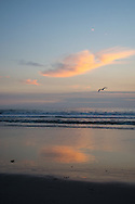 Perfect clouds and a seagull flying  over the Santa Monica Bay at sunset. Santa Monica, CA 1.9.15