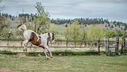 2017 Carlson Horses