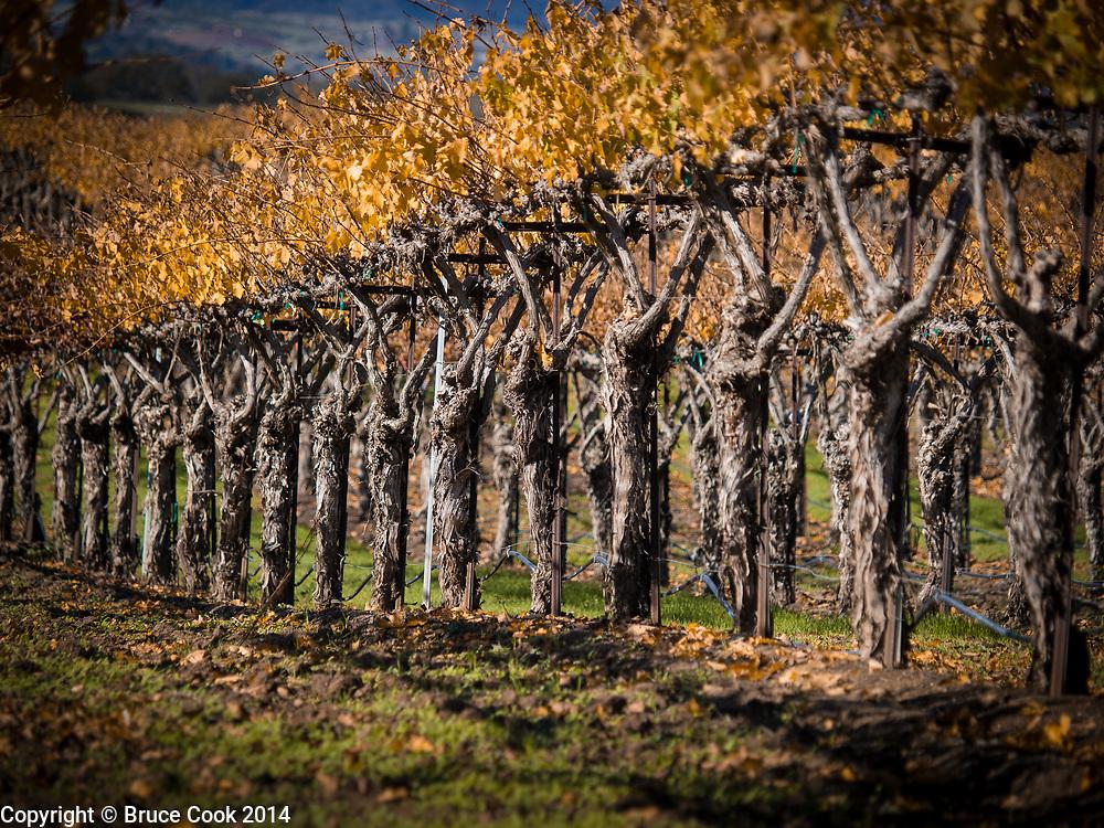 Sentinel Vines