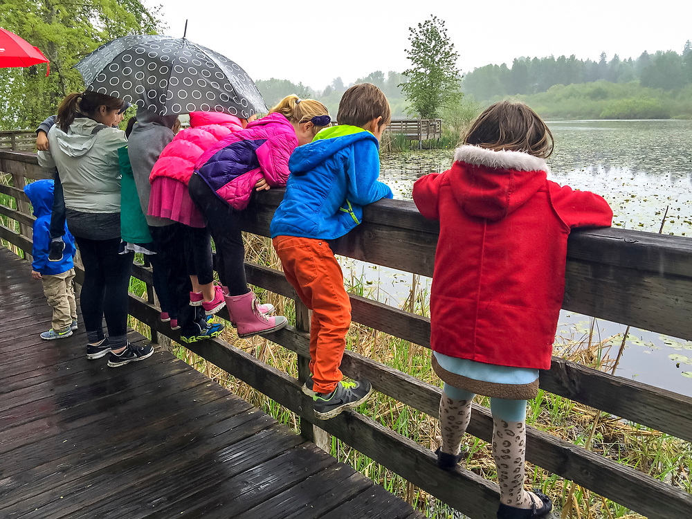 North America, United States, Washington, Kirkland, school children on nature walk in wetlands. NO MODEL RELEASES