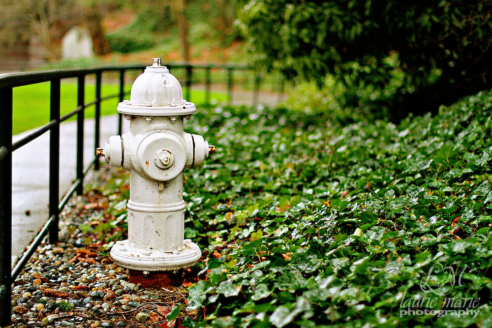 White fire hydrant in a green park