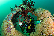 diver explores the crinoid and soft coral-covered wreck of<br /> the San Quentin or San Quintin, a Spanish gunboat sunk in 1898 during the Spanish-American War between Grande and Chiquita Islands at the entrance to Subic Bay, Philippines; wreckage is scattered over a reef at a depth of 9-18 m; MR 379