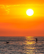 Paddle Boarder And Dolphin At Sunset
