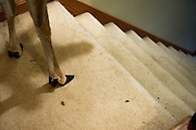 Dillie gains her footing as she prepares to amble down the steps. She walks up and down at her own leisure.